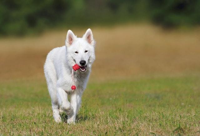 獣医師解説!犬の犬パルボウイルス感染症〜原因、症状、治療法〜