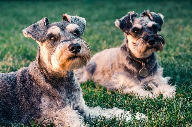 犬の異物の予防