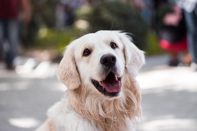 犬の肺吸虫症の臨床症状