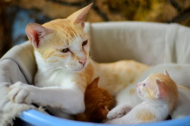 猫がイブプロフェン中毒を起こした時の治療