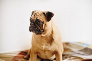 犬のフィラリア予防薬をあげる時の注意点