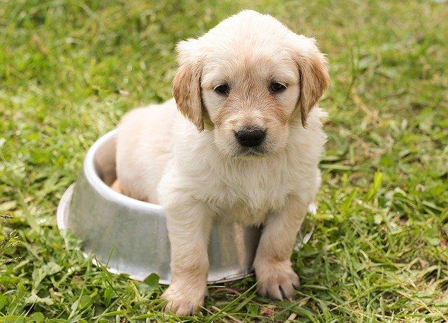 犬の狂犬病ワクチンの必要性!