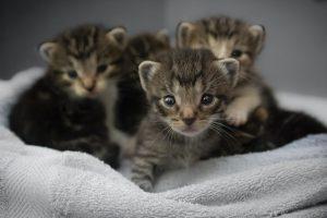 猫がエチレングリコールを食べてしまった時の中毒の症状