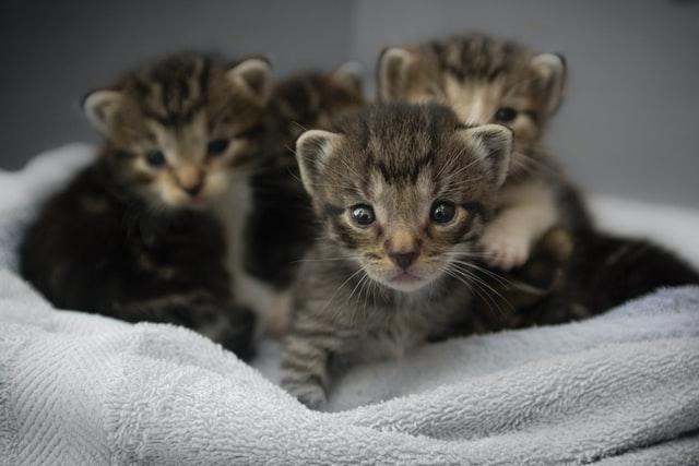猫がイブプロフェン中毒を起こす中毒量