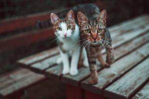 猫がニラ中毒を起こした時の治療