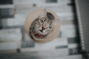 猫がネギを食べてしまった時に起こる病態