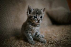 猫の殺鼠剤中毒の際の診断