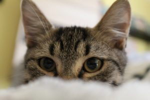 猫がメタアルデヒドを食べてしまった時に起こる病態