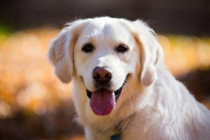 犬の殺鼠剤中毒の治療