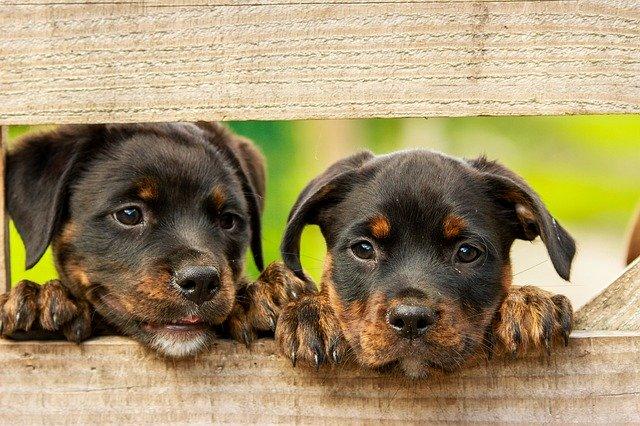 獣医師解説!犬の糖尿病〜症状、原因、治療方法〜
