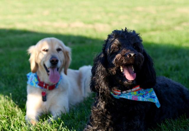 犬のジアルジア症の予防