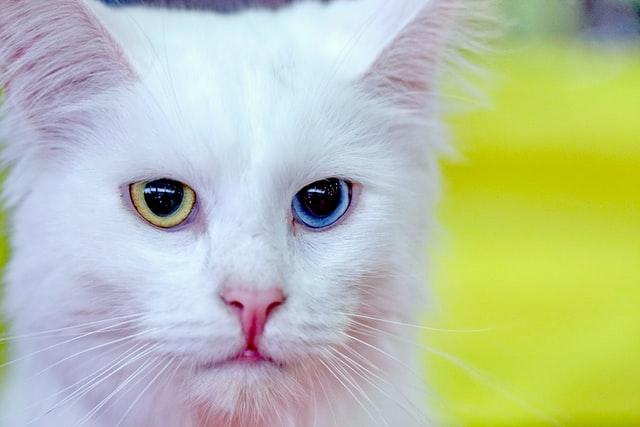 猫がイブプロフェンを食べてしまった時の症状