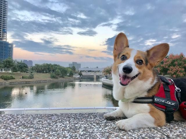 犬パスツレラ症の感染の臨床症状