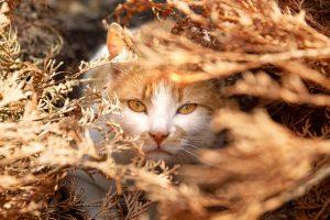 猫がアセトアミノフェンを食べてしまった時に起こる病態