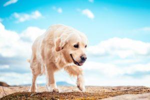 犬の殺鼠剤中毒の予防