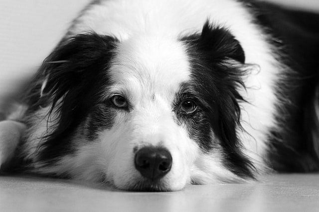 犬が玉ねぎを食べてしまった時に起こる病態