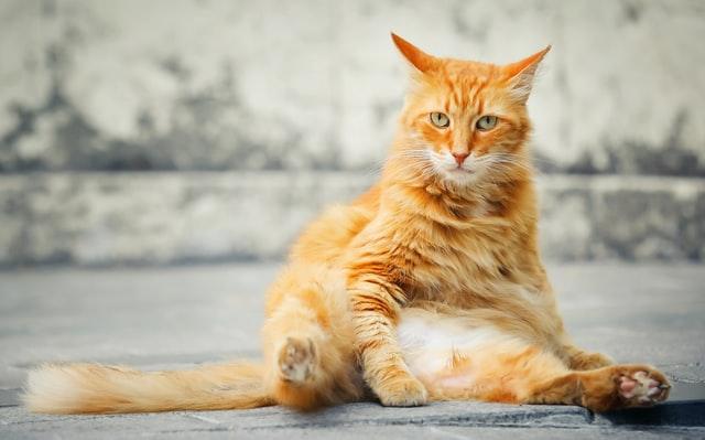 猫がメチルフェニデートを食べてしまった時に起こる病態