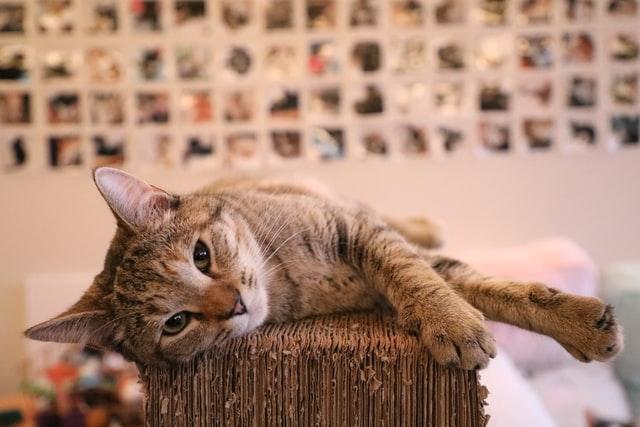 猫がイブプロフェンを食べた時の対処