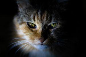 猫がニラを食べた時の対処