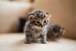 猫が殺鼠剤を食べた時に起こること