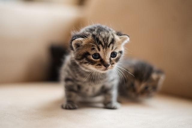 猫が食べると危険なアボカドとは?