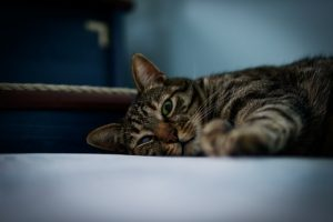 猫がニラを食べてしまった時の中毒の症状