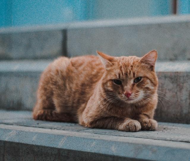 猫のカフェイン中毒の予防