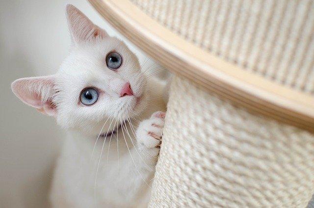 愛猫にノミが!卵や幼虫がいる可能性も!