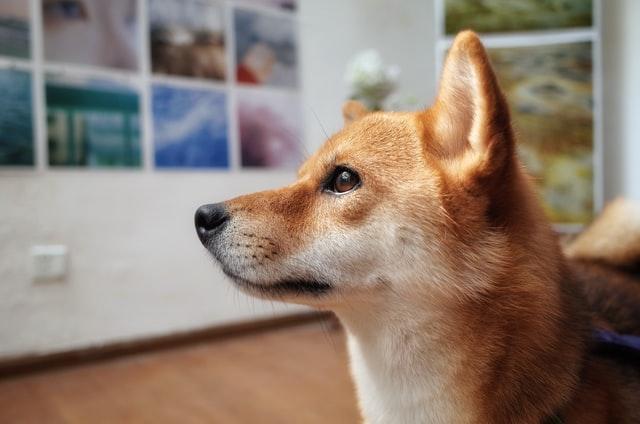 犬のジアルジア症の感染経路と生活環