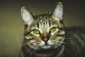 猫がメタアルデヒドを食べてしまった時の中毒の症状