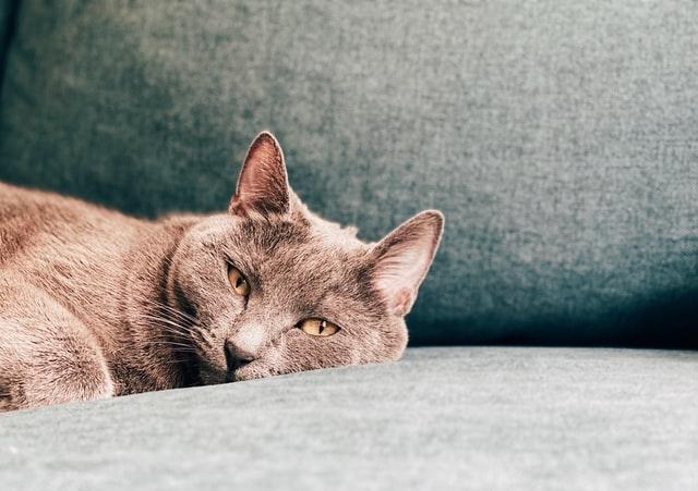 猫がイブプロフェンを食べてしまった時に起こる病態