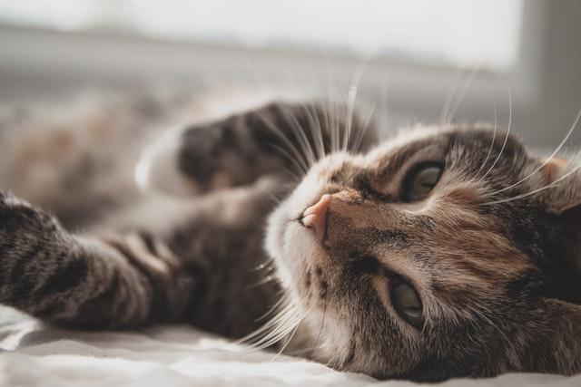 猫の皮膚にケミカルライトの溶剤を舐めた時の予後