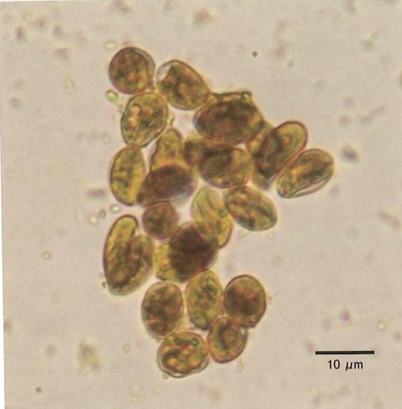 犬のクリプトスポリジウム症病原体と宿主