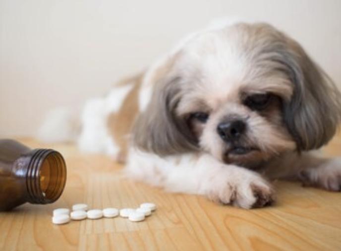 犬のコクシジウム症の感染の治療