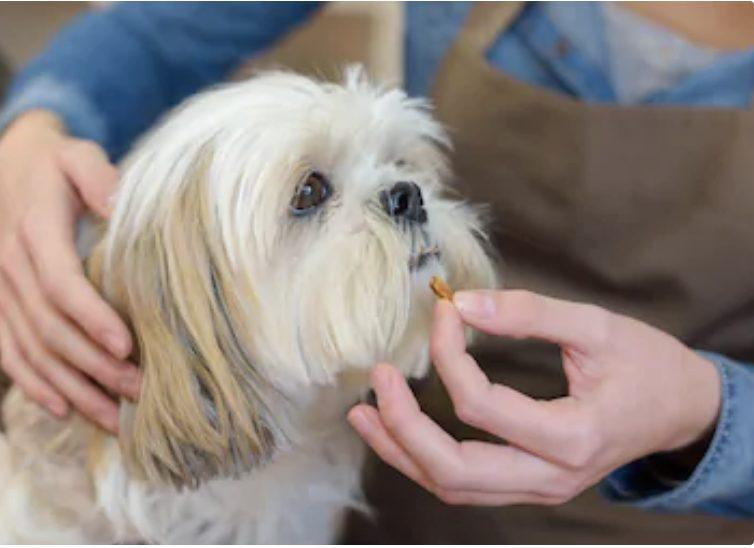 犬の瓜実条虫症の治療