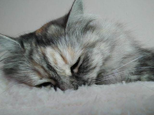 犬猫の原発性アルドステロン症の症状