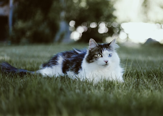 猫のコクシジウム症の臨床症状