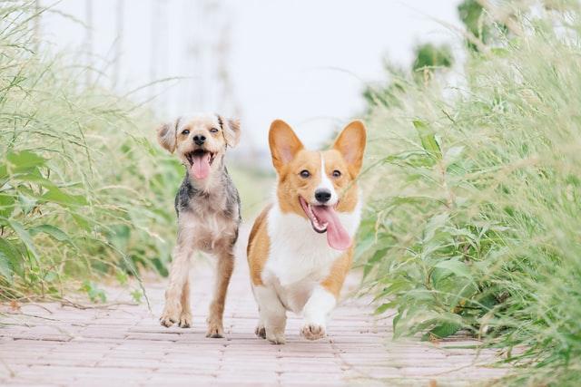 犬のネオスポラの臨床症状