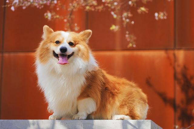 犬のコクシジウム症の宿主