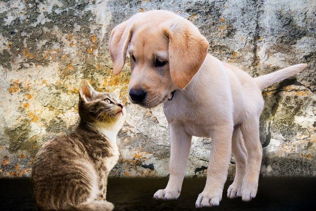 獣医師解説!犬と猫の低Ca 血症(副甲状腺:上皮小体機能低下症)〜原因、症状、治療法〜
