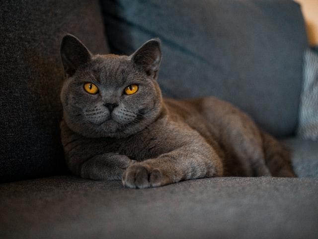 「高層マンションに住んでいるが、猫のフィラリア予防は必要か」