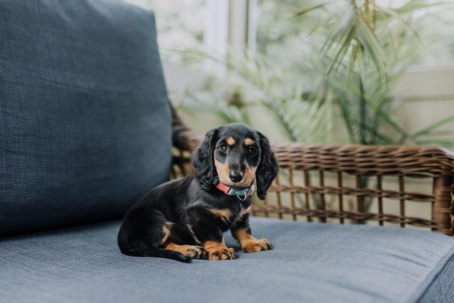 犬の線虫症の診断