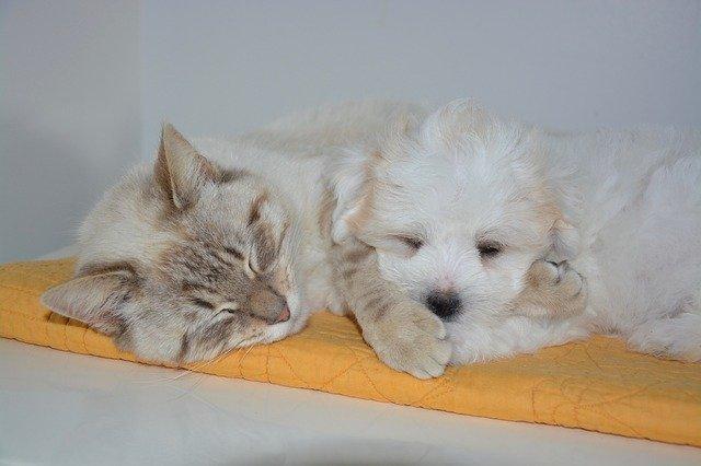 犬や猫の便秘、ウンチが出ない時の対症療法