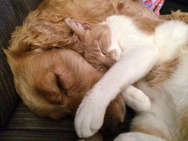 飼い犬・猫の感染症を疑う症状を知る