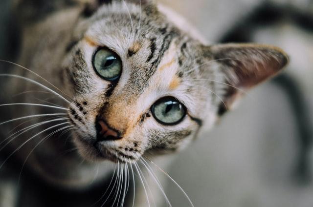 猫のコクシジウム症の診断