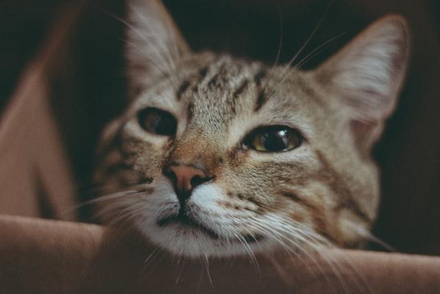 猫の猫胃虫、毛細線虫の臨床症状
