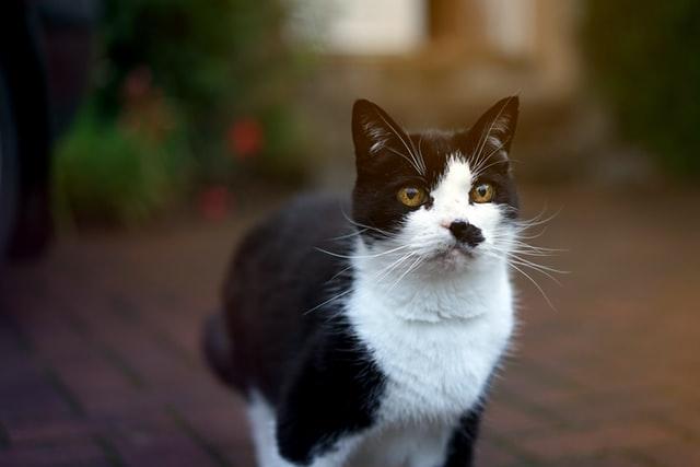 猫のコクシジウム症の予防