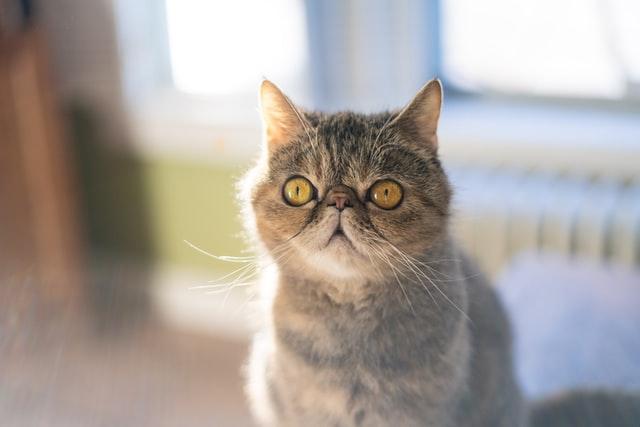 獣医師解説!猫の回虫症〜症状、原因、治療法〜