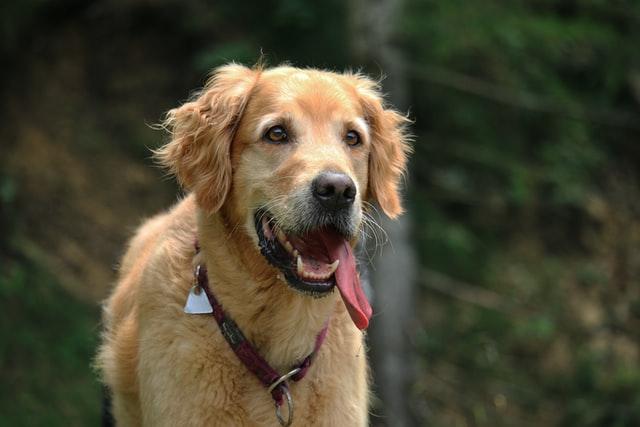 犬の鉤虫症の感染の特徴