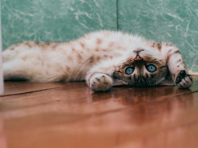 猫のツメダニ感染症の診断